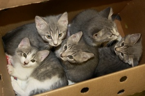 box-o-kittens