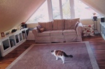 After remodel. Lola is in the foreground. What a great cat.