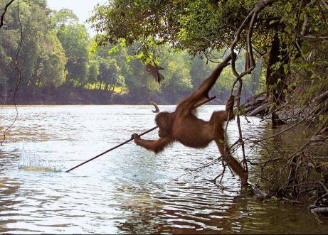 primatology.net