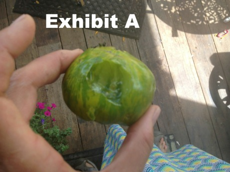 This annoys me. It's a green zebra tomato, eaten by the bushy tailed vermin, AKA Squirrel, at the peak of ripeness. I HATE YOU!