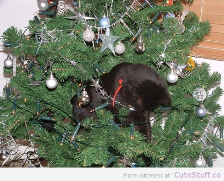 black-cat-in-christmas-tree