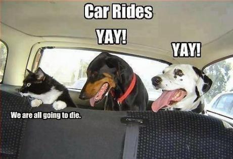 Cat Vs Dog Car Rides