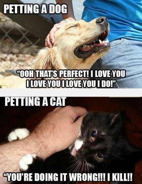 Cat+vs.+Dog....+too+true.+I+ve+lived+with+both_746927_4927247
