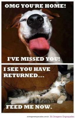 dog-cat2-255x398