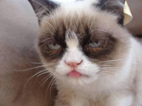 post-9976-Grumpy-Cat-tongue-out-qOxm