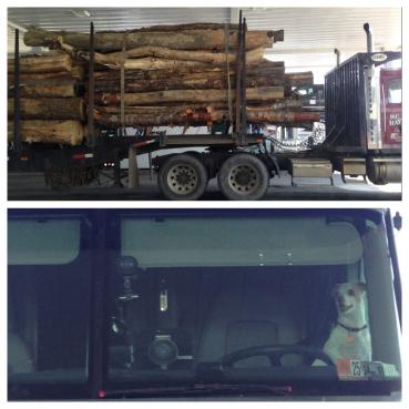 Cutest long haul trucker ever.