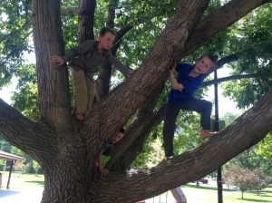 Hanging out in a tree with friends