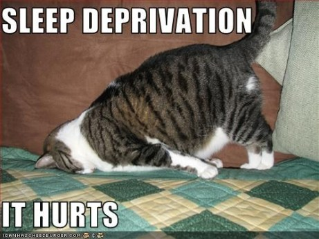 cat_sleep_deprivation