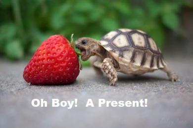 turtle-strawberrywithcaption