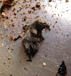 Mice Krispies!