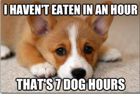 first-world-dog-problems-meme-2