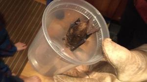 Scared bat