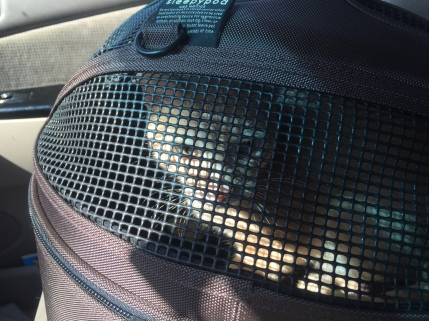 Back in the car, this time in a carrier