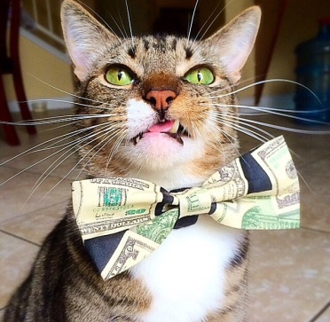 Well hell. How am I going to get paper for my #cashcat now?