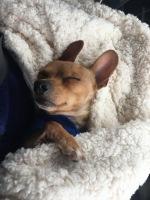 Scheissehund has never been happier in his entire life