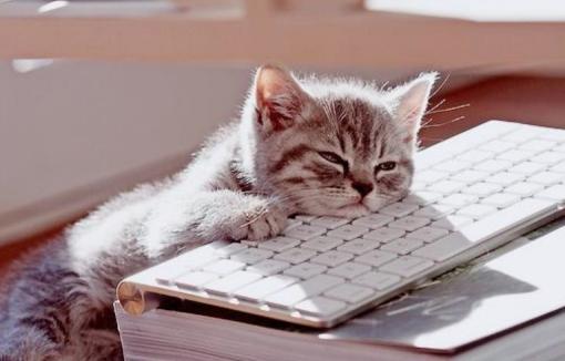 bored-cat_Fotor.jpg