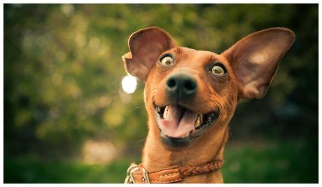 happy-dog