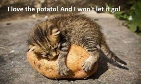 love-potato.jpg