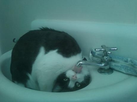 cat-drink-water.jpeg