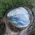 Interesting mushrooms growing around the stone
