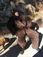 A lounging bear